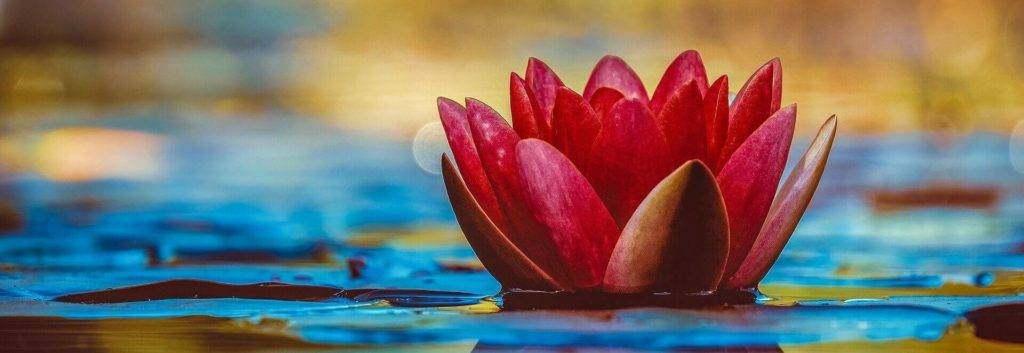 Eine rote Lotusblüte als Symbol für eine erotische Massage.
