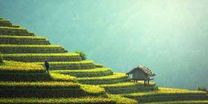 Haus in einem Hang mit Reisterrassen.